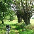 Z Marianowa jedziemy do Zwoli #wierzba #wierzby #droga #rower #rowery