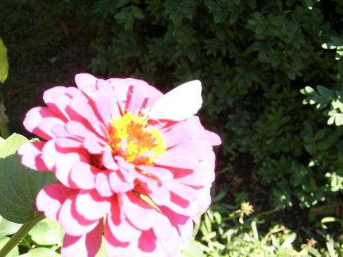 Czerwiec 2006 -> działka :) i kwiateczki ;D