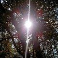 pomiedzy drzewami #swiatło #drzewo #błysk