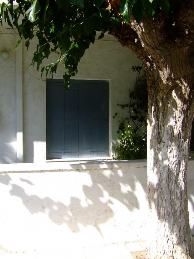 #architektura #drzewa