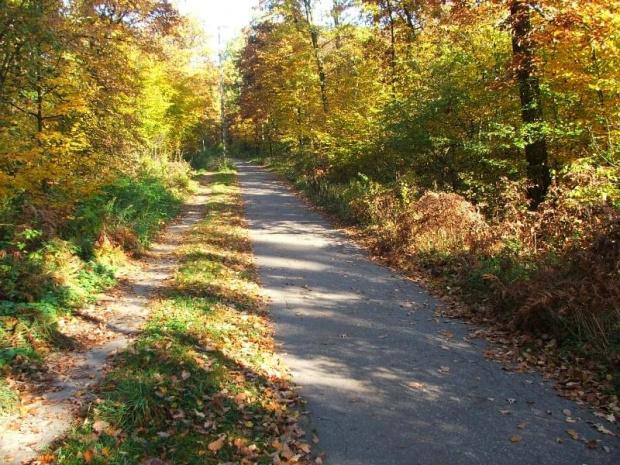 Ścieżka rowerowa do Zakładów Azotowych #las #jesień #ścieżka #droga #Azoty #Puławy