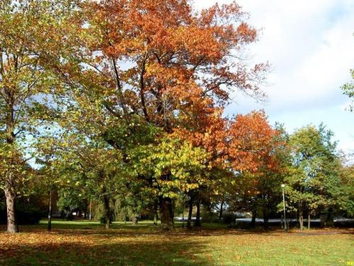 Gdańsk-park miejski #park #jesień #widok #drzewa #przyroda