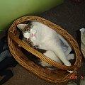 #kot #kotek #kocica #koszyk