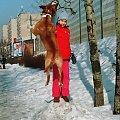 Latający pies #Pies #amstaf #ast #skok