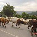 Gruzja-Gelati #Gruzja #widoki #zabytki #miejsca