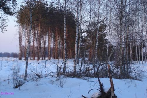 Lasy Piskie #PuszczaPiska