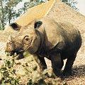 Zwierzaki,ptaki i owady #nosorożec