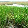 Jezioro Piskory #Piskory #jezioro #rezerwat