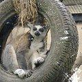 #zwierz #odpoczynek