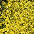 yellow flowers #yellow #kwiatki #żółto #zyzio