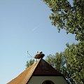 bocki Bornheim #bornheim #gniazdo #bociany #obserwacje